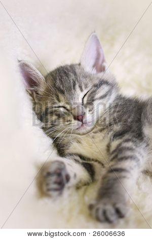 Sleeping Kitten on a white sheepskin