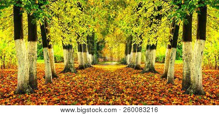 Fall landscape - bright fall trees and orange fallen leaves on the ground. Colorful fall alley in the city fall park, fall nature scene