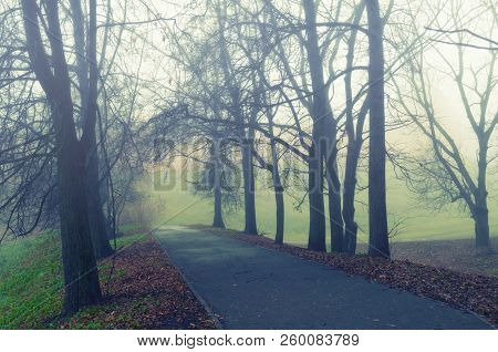 Autumn landscape - somber foggy autumn park alley with bare autumn trees and dry fallen orange autumn leaves. Mysterious autumn landscape scene
