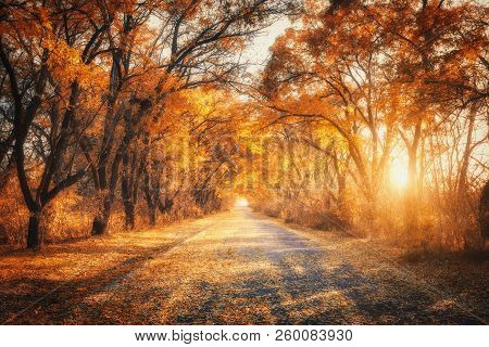 Autumn Forest With Country Road At Sunset. Trees In Fall