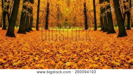 Autumn colorful landscape - autumn trees and orange fallen autumn leaves on the ground. Colorful autumn city park. Fallen autumn leaves on the ground, autumn park scene