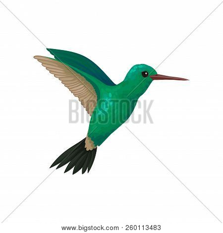 Flying Hummingbird, Tiny Colibri With Bright Turquoise Plumage Vector Illustration On A White Backgr