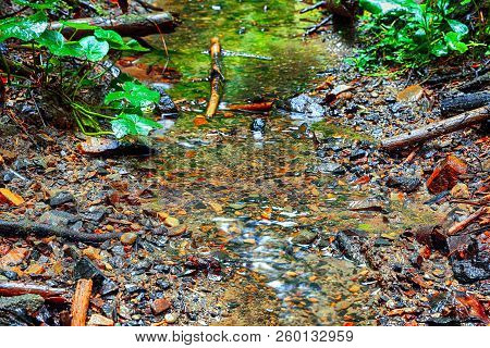 Forest Stream Among Stones. Clean Cold Water Stream In Mountains. Fresh Stream Current Between Rocks
