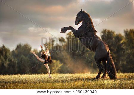 Little Ballerina Girl With Black Friesian Stallion At Summer Evening