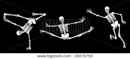 Vector skeletons