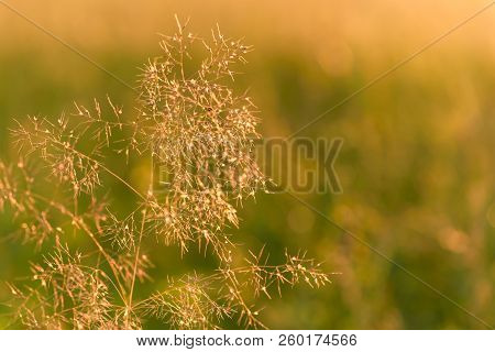 Blurred Bokeh Natural Evening Meadow In The Sunset Light