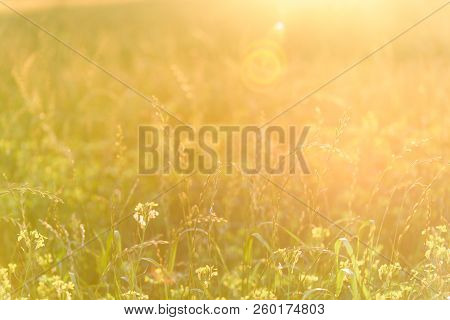 Wildflower Meadow. Blurred Bokeh Natural Evening Meadow In Sunset Light.