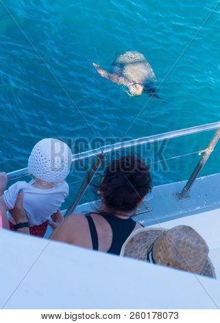 Kareta Turtle Swimming In The Greek Sea.