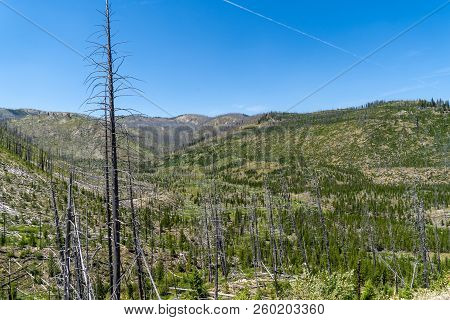 Hundreds Of Burned Trees In The Sawtooth Wilderness Mountains Of Idaho. Deforestation