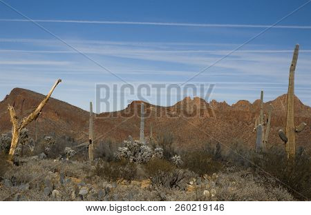 Sahuaro National Monument Desert Landscape Tucson, Arizona
