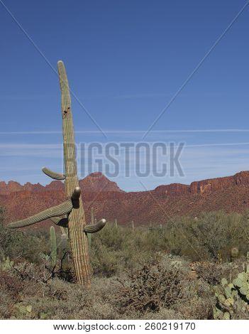 Tucson Arizona Desert Mountains And Hills Saguaros
