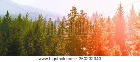 Abstract Image Of Mysterious Misty Fog Pine Tree Red And Green Sunset Or Sunrise Forest