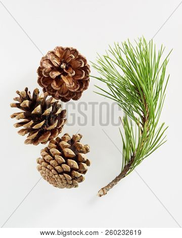 Pine branch with pine cones on white background.