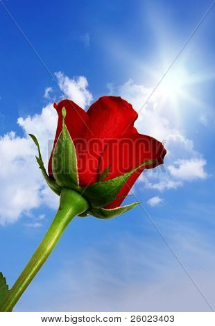Red rose against blue sky
