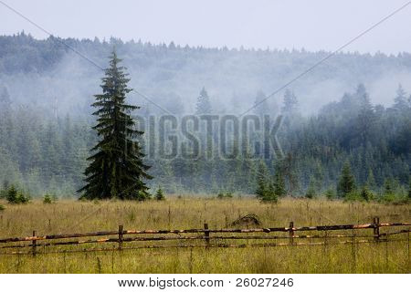 mist in the mountain forest
