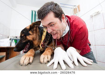 Funny vet imitating his german shepherd patient poster