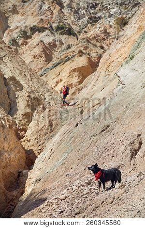 Man With Dog In The Mountains