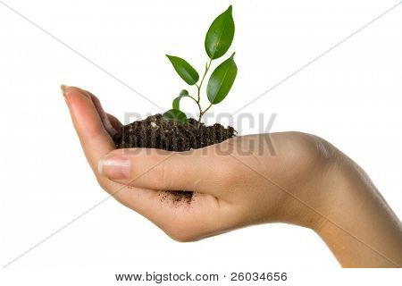 Plant in hand on white background