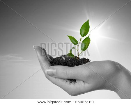Hand with a plant on a background of the blue sky. Black-and-white background and green plant