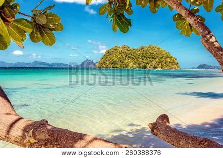 Ficus Tree With Blue Sky Background On A Sandy Beach In The Philippines, El Nido