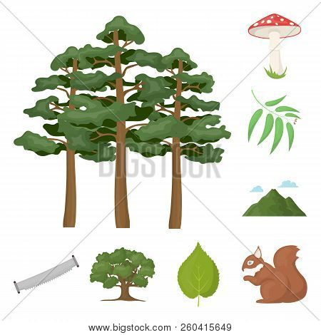 Forest And Nature Cartoon Icons In Set Collection For Design. Forest Life Vector Symbol Stock Web Il