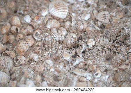 The Old Shells Fossil In Stone Background