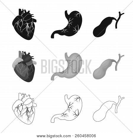 Isolated Object Of Body And Human Sign. Collection Of Body And Medical Stock Vector Illustration.