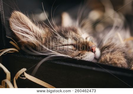 A Gray Striped Cat Sleeps In The Box