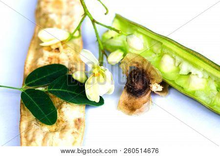 Moringa Oleifera Leaves And Flower