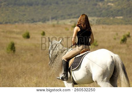 Rider On A Horse. Horse In The Open Field With A Rider. Home Horse Riding. Driving The Horse Reins.
