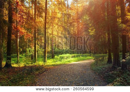 Autumn forest landscape with trees in the autumn forest in sunny weather. Sunset autumn forest nature, row of forest autumn trees and narrow path at autumn sunset. Colorful forest nature scene