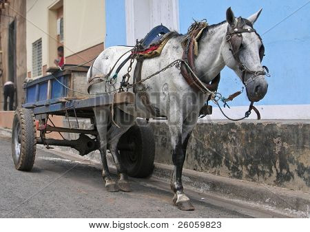 horse  and cart granada nicaragua poster