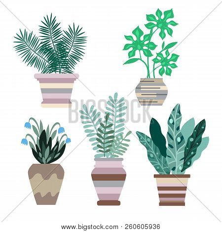 Interior With Flowers. Cactus And Tropical Flowers In Flowerpots. Home Modern Apartment Design . Car