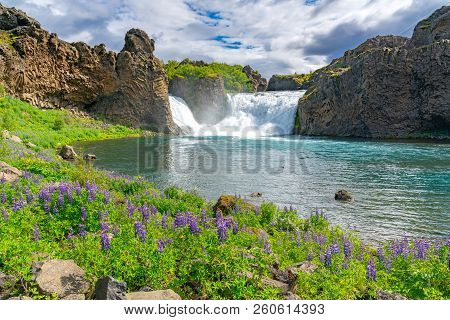 Hjalparfoss Waterfalls With The Lupine Field And The River Fossa In Highland Of Iceland