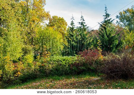 City Park Scenery With Yellow Foliage. Lovely Nature Background