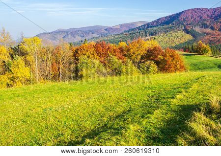Beautiful Autumn Landscape In Mountains. Green Grass On The Meadow. Yellow And Red Foliage On Trees.