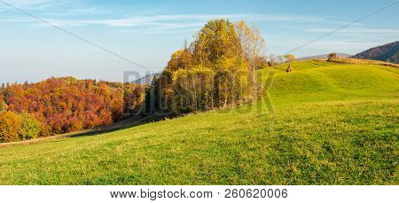 Panorama Of Forest On Grassy Hill In Autumn. Beautiful Rural Scenery Of Mountainous Countryside In S