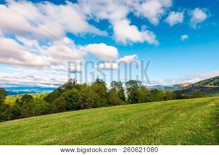 Early Autumn Countryside In Mountains. Row Of Trees Behind The Grassy Meadow. Fluffy Clouds On A Blu