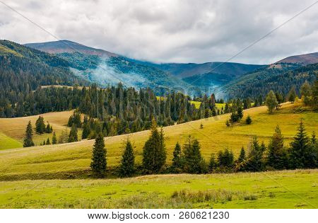 Overcast Autumn Day In Mountains. Grassy Rolling Hills With Spruce Trees. Beautiful Countryside Land
