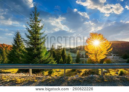 Wonderful Morning In Mountains. Sun Beams Come Through The Tree Crown In Golden Foliage. Beautiful A