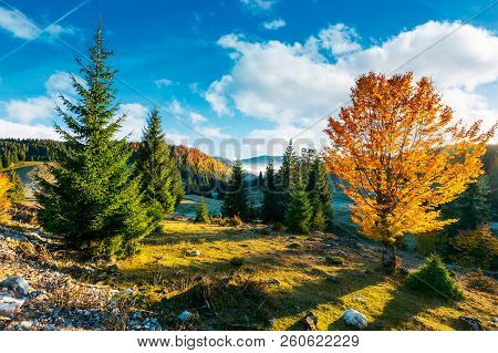 Beautiful Sunrise In Autumn Countryside. Trees In Fall Color Foliage. Distant Valley In Fog. Beautif