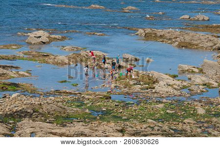 25 July 2018, Les Sables D Olonne France : People With Nets Seaside Foraging In Rocks In Les Sables