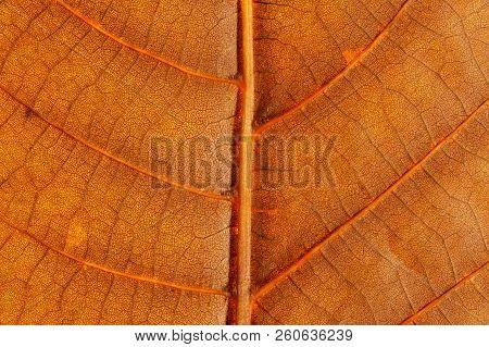 Macro. Veins Orange Autumn Bright Beautiful Leaf Closeup