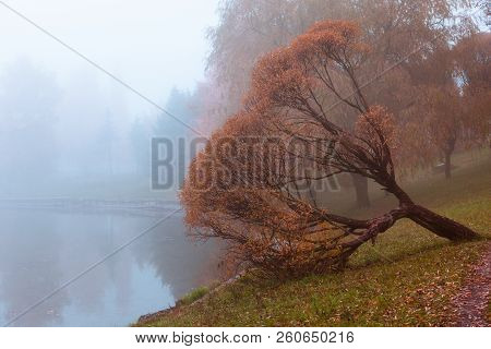 Foggy Autumn Gray Landscape With Fallen Orange Tree And Mirror Reflection In Lake, Horizontal Compos