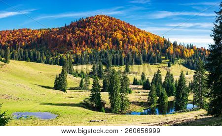 Splendid Autumn Landscape On A Bright Day. Spruce Trees On Hill Around The Pond. Forest In Colorful