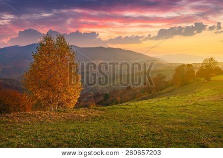 Birch Tree On A Hill In Autumn At Sunrise. Beauttiful Mountainous Countryside With Gorgeous Sky. Bri