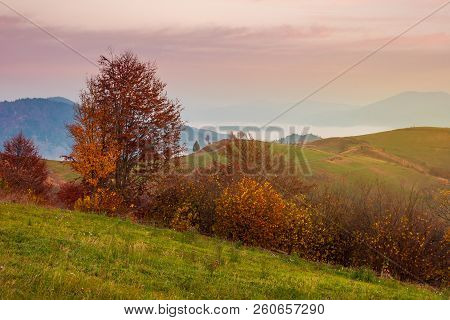 Late Autumn Dawn With Pink Sky In Mountains. Red Foliaged Trees On The Grassy Hill. Rising Fog In Th