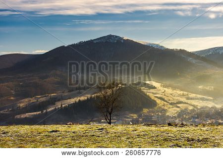 Lonely Naked Tree On Hill In Autumn. Hazy Morning. Distant Mountain With Snowy Top
