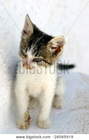 Sick and poor kitten waiting for your assistance