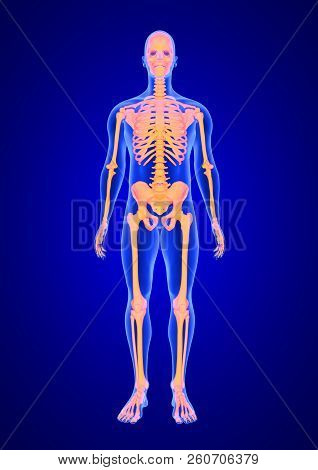 Blue Human Anatomy Body And Skeleton 3d Scan Render On Blue Background From Front View